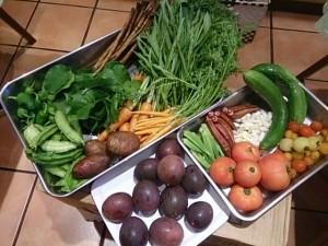 都城お野菜